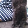 黒い赤ちゃん猫