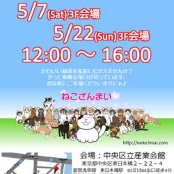 5月7日(土)『ねこざんまい譲渡会』12時スタート!子猫ちゃんたちも参加します