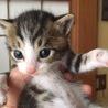 生後2週間♪超かわいい子猫ちゃん