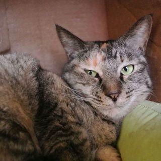 人も猫も大好きサビ猫みかん!
