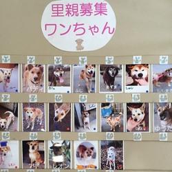 わんにゃん小梅保育園☆川越で保健所レスキュー犬猫の里親会☆子猫多数 サムネイル2