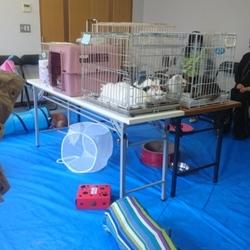わんにゃん小梅保育園☆川越で保健所レスキュー犬猫の里親会☆子猫多数 サムネイル3