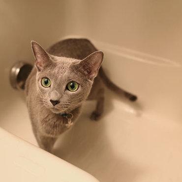 風呂嫌いだが風呂場好き