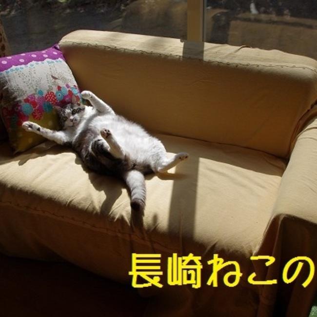 長崎ねこの会のカバー写真