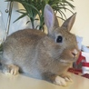 ミニウサギとネザーのハーフの赤ちゃんです!