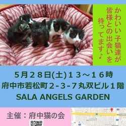 5月28日子猫の譲渡会を開催します♪ @府中.