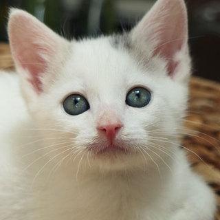 超美形白青バン