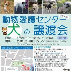 動物愛護センターの犬の里親会 IN ちはら台 (RADAC主催)