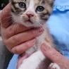 生後1ヶ月6匹の子猫