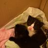 生後一ヶ月ほど☆黒白の子猫です