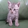 生後一か月の子猫(メス)です