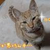 甘えん坊チャッピー サムネイル2