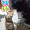 甘えん坊チャッピー サムネイル6