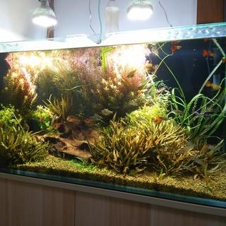 熱帯魚、水槽セット