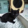 ふわふわ黒の子猫♂ サムネイル2