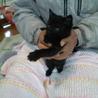 ふわふわ黒の子猫♂ サムネイル7