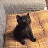 黒猫男の子 里親さん募集