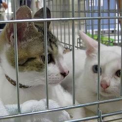 6月4日(土)三好ネコの会「子猫の祭り」・愛知県みよし市