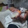 4月17日生まれの子猫。