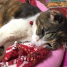 あまえんぼうの捨て猫バーニャの家族になってください