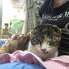 あまえんぼうの捨て猫バーニャの家族になってください サムネイル3