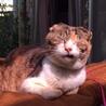 あまえんぼうの捨て猫バーニャの家族になってください サムネイル7