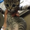 奈良県生駒市 保護猫カフェDearCatです。