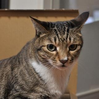 ムサシ、多頭崩壊現場の猫です。