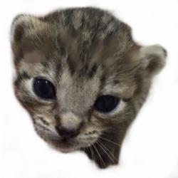 きーちゃんち「猫の譲渡会」【名古屋市名東区】