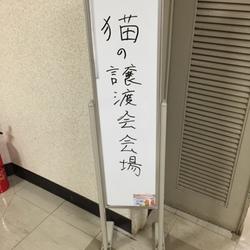 猫の譲渡会in長野県飯田市