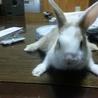 ミニウサギの子供