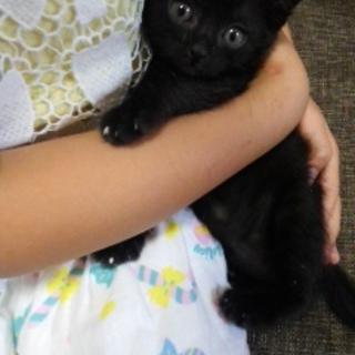 黒子猫1カ月すぎゆきちゃん