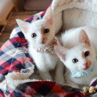 白猫【ゆば】甘えん坊さんでキュートな女のコです