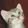カレンダーの子猫ちゃんみたい!