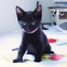 仲良し黒猫2兄妹(6月中旬から下旬お届け可能)