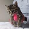 子猫ちゃん、可愛すぎて、困ります(笑)