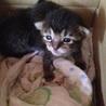 生後1ヶ月程の赤ちゃんネコ