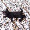 でら!黒猫ファミリー! サムネイル6