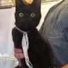 白リボンの黒猫ちゃん