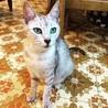 美猫!サバトラのルナさん