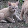 可愛い子猫ちゃんたちの里親募集中