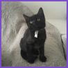 おっとり黒猫ティンプーくん