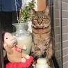 身寄りのない高齢猫の保護・譲渡先について