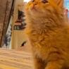 兄弟子猫に新しい家族を探しています サムネイル2