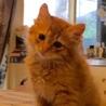 兄弟子猫に新しい家族を探しています サムネイル3