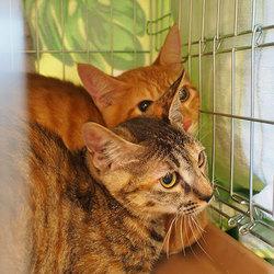猫の里親 譲渡会(日進市) サムネイル3