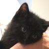 美しい4兄弟子猫に新しい家族募集中 サムネイル2