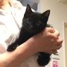 美しい4兄弟子猫に新しい家族募集中 サムネイル3