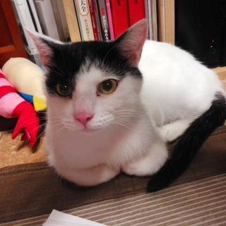 スリスリ甘える猫♡たくちゃん