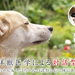 ☆岡山にてペットの漢方治療~申し込み、受付中!